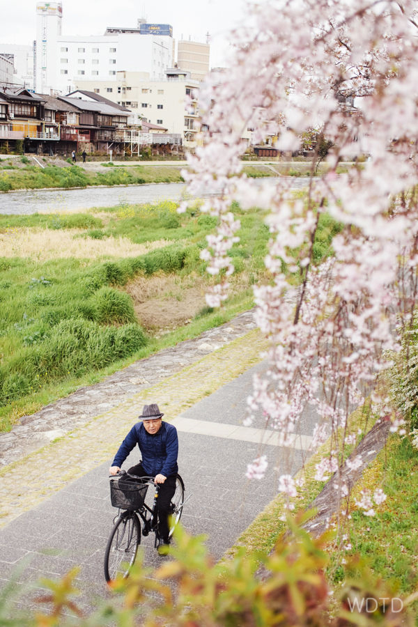 The local's out cycling along the Kamo river - taking in all the good things spring has to offer