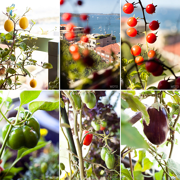 Just a few of Indira's edible balcony fresh produce against the stunning backdrop